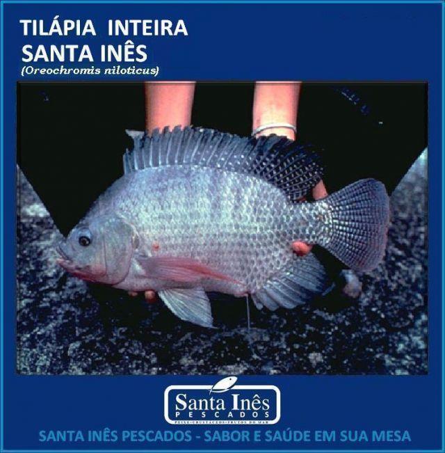 TILÁPIA - INTEIRA EVISCERADA