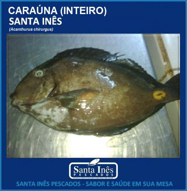 CARAÚNA - INTEIRO