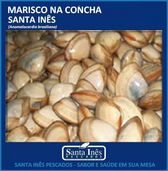 MARISCO - INTEIRO NA CONCHA