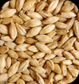 MALTE PILSEN produzido a partir de cevada de 2 fileiras de primavera 25kg