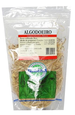 Algodoeiro (Gossypium Herbaceum)